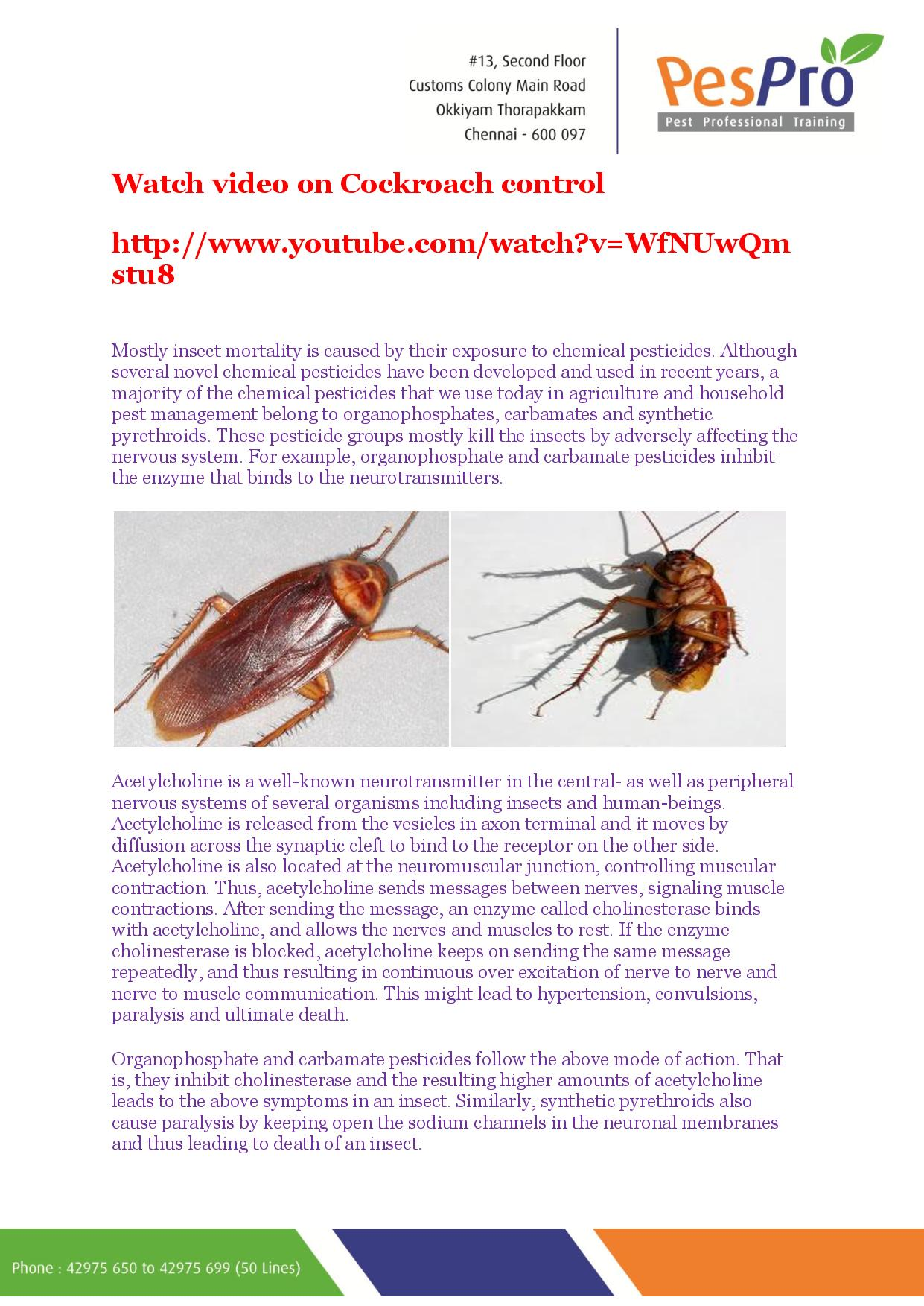Cockroaches – Night Invaders | PesPro