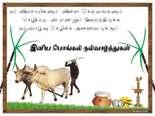 Pongal feast of the harvest in tamil nadu pespro pongal greetings 22 m4hsunfo