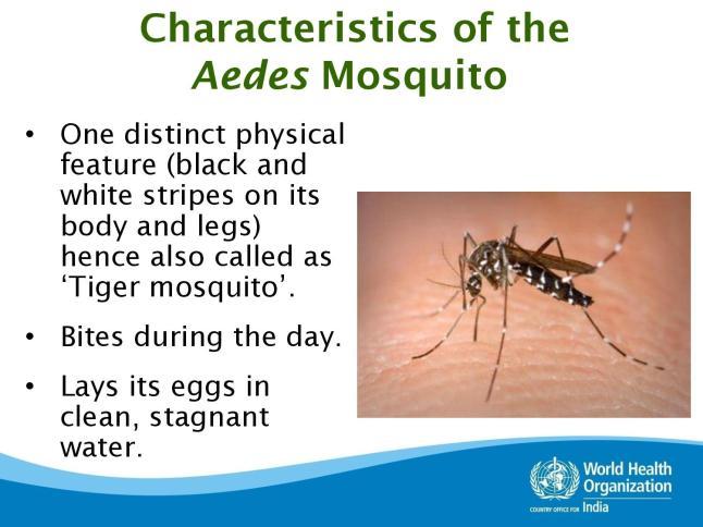 dengue-page-004