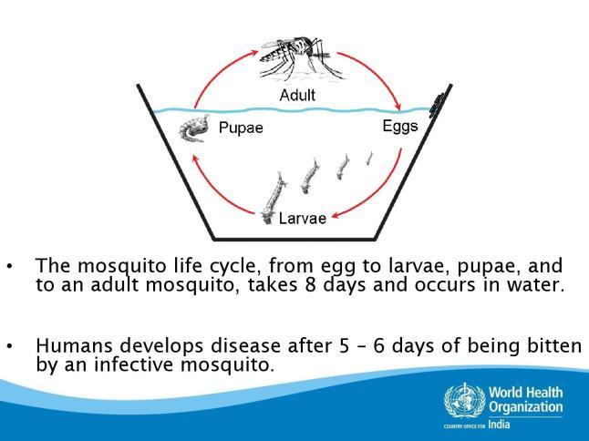 dengue-page-008